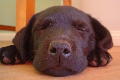とても眠くなる